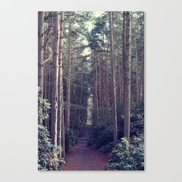 Forest Avenue Canvas Print