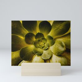 Details in the Succulent Mini Art Print