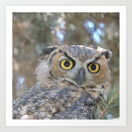 Young Owl at Noon Art Print