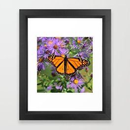 Monarch Butterfly on Wild Asters (square) Framed Art Print