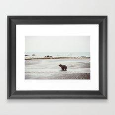Pup seal crossing the road Framed Art Print