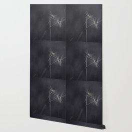 the dance Wallpaper