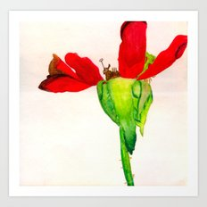 Autumn Rose Art Print
