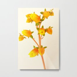 Succulent Spring Bloom Metal Print