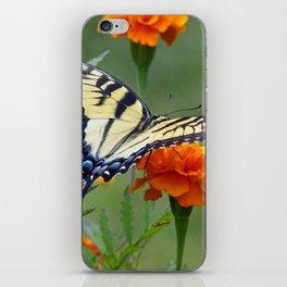 Yellow female Eastern Tiger Swallowtail  iPhone Skin