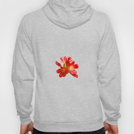 Red Natal Lily Hoody