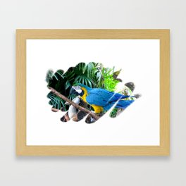 Blue Yellow Macaw. Parrot Framed Art Print