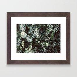 Botanical Gardens - Zebra Leaf #398 Framed Art Print