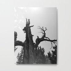 tree film Metal Print