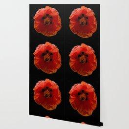 tropical red flower Wallpaper