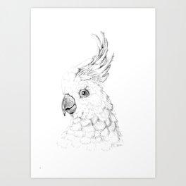 Sulphur Crested Cockatoo - Black and White Portrait Art Print
