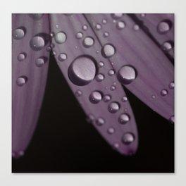 Petal Power 3 Canvas Print