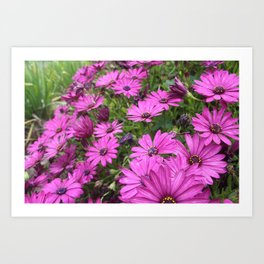 Daisies Spring In All Its Splendor Art Print