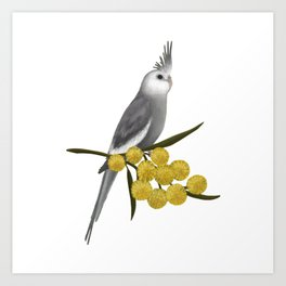 White Faced Cockatiel Art Print