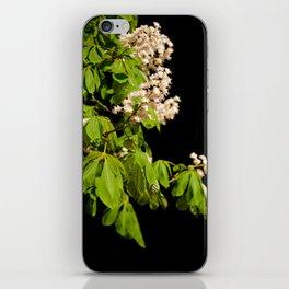 blooming Aesculus tree on black iPhone Skin