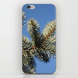 All spruced up and still blue - Blue spruce, blue sky 1564 iPhone Skin