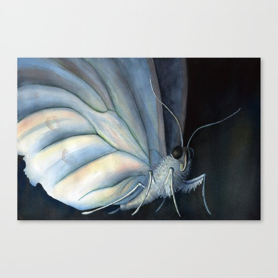 White Morpho Butterfly Canvas Print