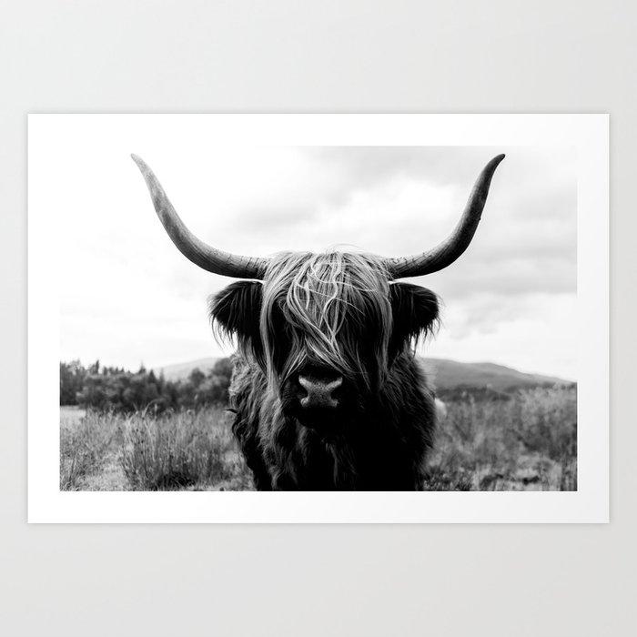 Scottish Highland Cattle Black and White Animal Kunstdrucke