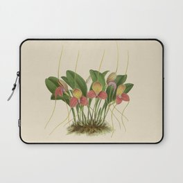 File:R. Warner & B.S. Williams - The Orchid Album - vol 01 - plate 005 Laptop Sleeve