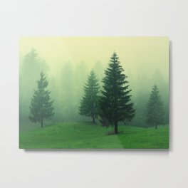 Beautiful green forest with tall trees in a foggy weather Metal Print