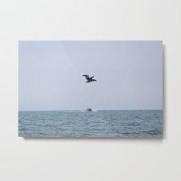 Pelican in Flight Metal Print