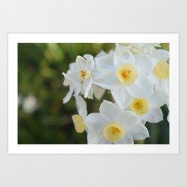 Daffodil Dream  Art Print