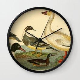 Naturalist Ducks Wall Clock