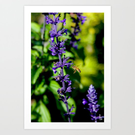 Purple Pollination Art Print