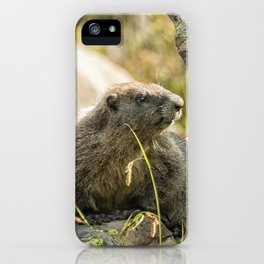 Marmot on Naches Peak iPhone Case