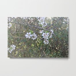Almond tree branches and flowers Metal Print