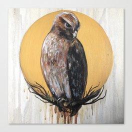 Hawk Vision Canvas Print