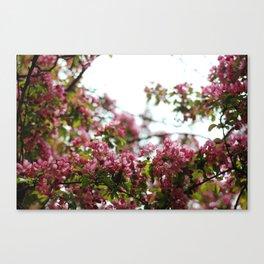Pink Blossoms #01 Canvas Print