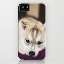 husky puppy. iPhone Case