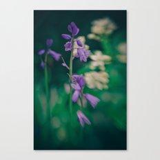 Bluebell Canvas Print