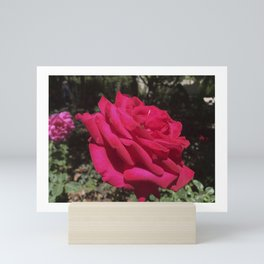 Red Rose with insect Mini Art Print