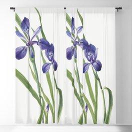 Iris (Iris species) (1939) by Mary Vaux Walcott Blackout Curtain