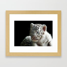 White Tiger Cub Framed Art Print