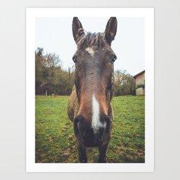 Horse Face Portrait - Farm Animals and Nature Photography Art Print