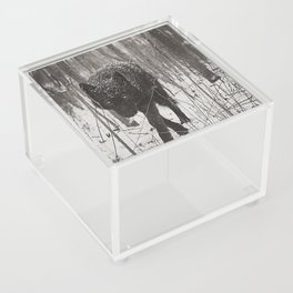 Snow Wolf Acrylic Box