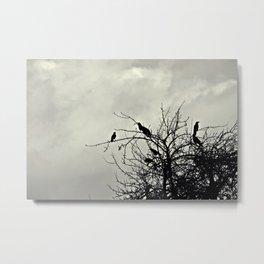 wolkenweiß/rabenschwarz Metal Print