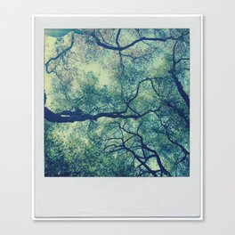 Tree Canopy On Polarized Film Canvas Print