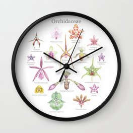 Selection of Orchid Species  Wall Clock