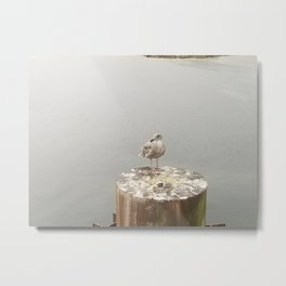 Seagull Sentinel Metal Print