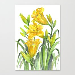 Yellow Day Lillies Canvas Print