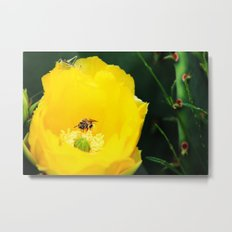 Cactus Flower, Bee and Grasshopper Metal Print