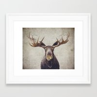 moose Framed Art Prints featuring Moose by Retro Love Photography