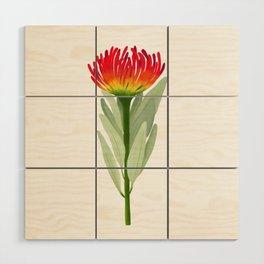 Flame Protea Flower Wood Wall Art