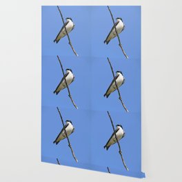 Handsome Male Tree Swallow on a Branch Wallpaper