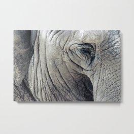 Texture of an Elephant Metal Print