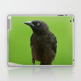 Black Bird Common Grackle Laptop & iPad Skin